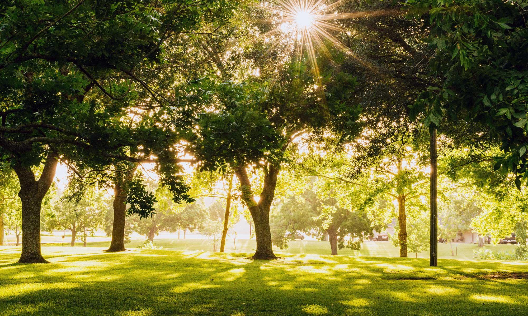 Sunlight In Trees At Park